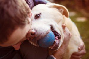 terapie asistata de animale